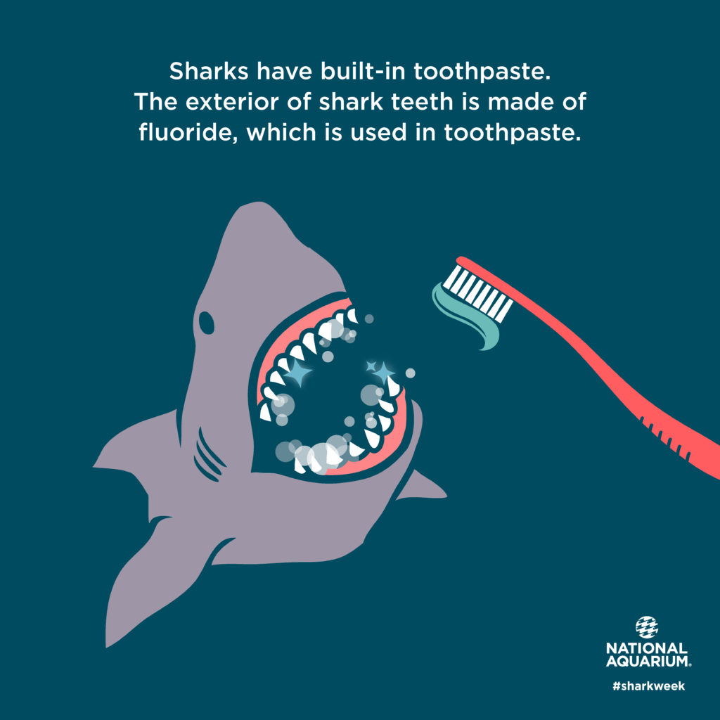 sharks buit-in toothpaste